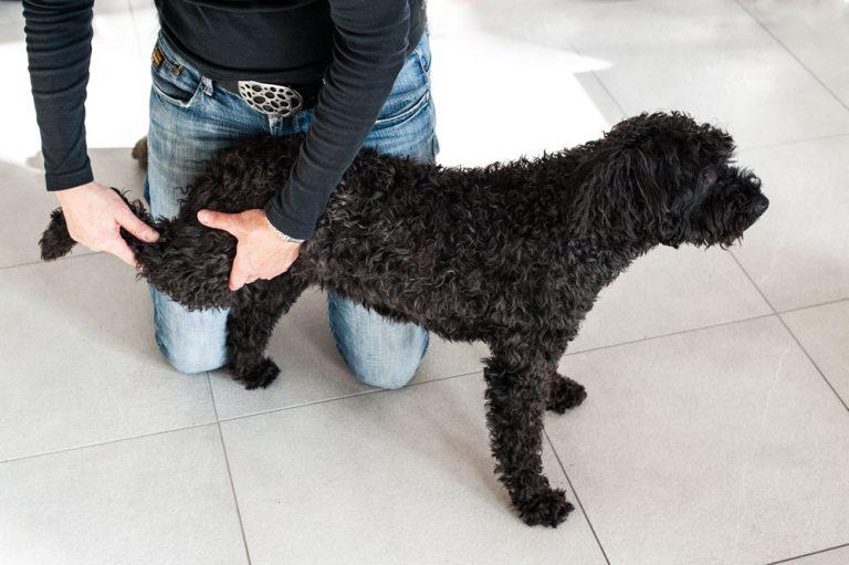 hund zerrung hinterbein